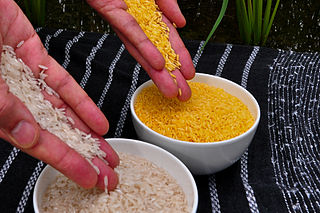 Bild Goldener Reis